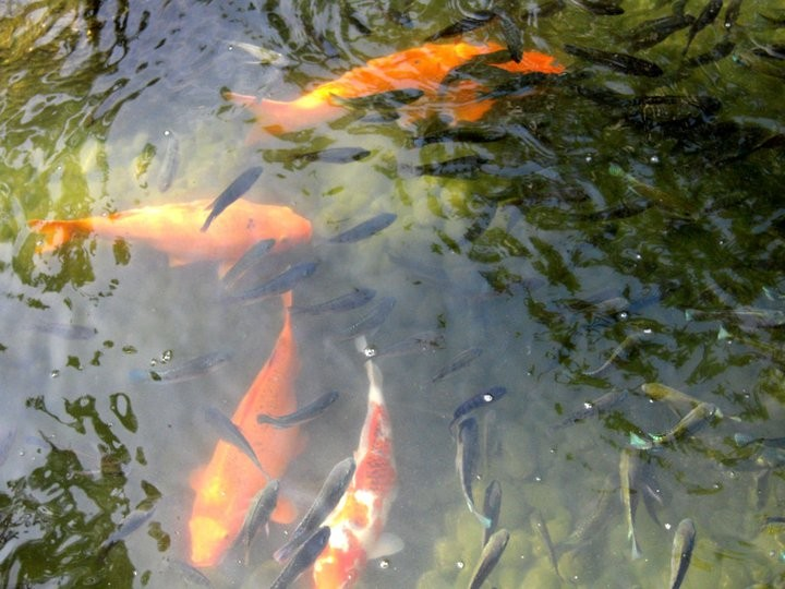 There were also koi ponds.
