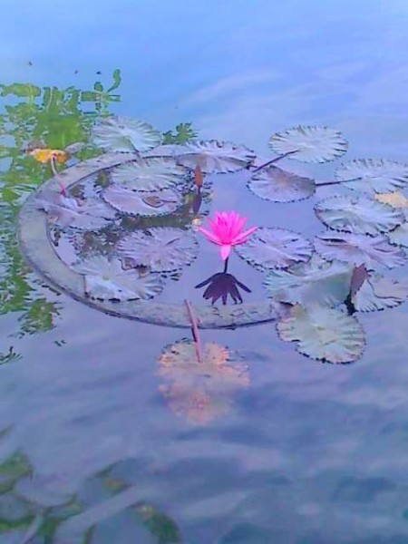 Water lilies float in infinity.