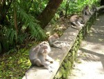 Monkeys waiting for the next visitors.