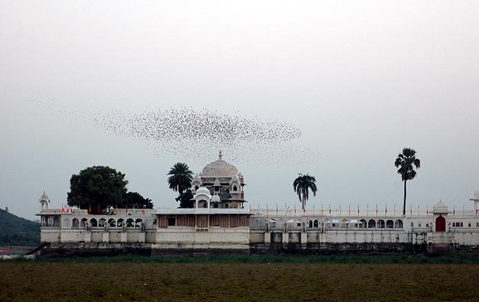 Mystical flocks of birds appear and disappear into the Invisible at Jagmandir Palace.