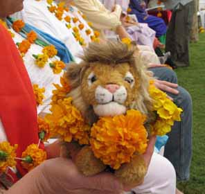 Our Lions got their own marigold garlands  thanks to Alberto.