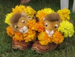 Some Lions got to sit in fancy shoes...